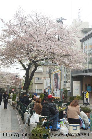 【2013東京賞花】 Day2:櫻花樹下一定會有聚餐喝酒人潮