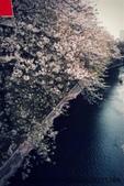 【2013東京賞花】 Day2:目黑川櫻花