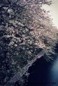 【2013東京賞花】 Day2:好險還有櫻花可以拍