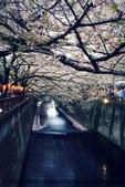【2013東京賞花】 Day2:雖然已經長了綠葉 不是滿開