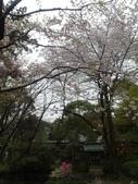 【2013東京賞花】 Day2:拍不完的櫻花