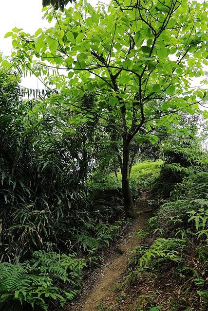 IMG_1826.JPG - 2018.04-基隆/七堵-下坡山(友蚋山)