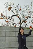 2008熊本:偷摘柿子?