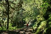1070923 嘉義阿里山*阿里山森鐵 十字路站~得恩亞納部落~多林站 O行:DSC_2065.JPG