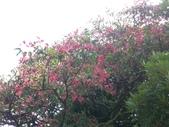 台寶休閒農村景觀:野紅花.JPG