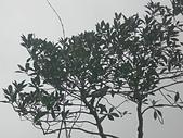 台寶休閒農村景觀:CIMG1275.JPG
