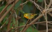 紅嘴相思鳥:DSC_9682.jpg