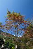 2014/11/23苗栗之旅:2014-11-23苗栗之旅015.JPG