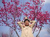 陳帝允的登大人記錄(2007-1歲):櫻花樹下