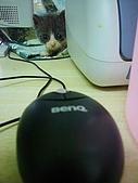 小三八:老鼠,滑鼠,傻傻分不清楚~