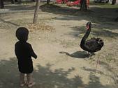 陳帝允的登大人記錄(2009-3歲):02.17在台南