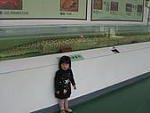 陳帝允的登大人記錄(2009-3歲):IMG_0252_大小.jpg