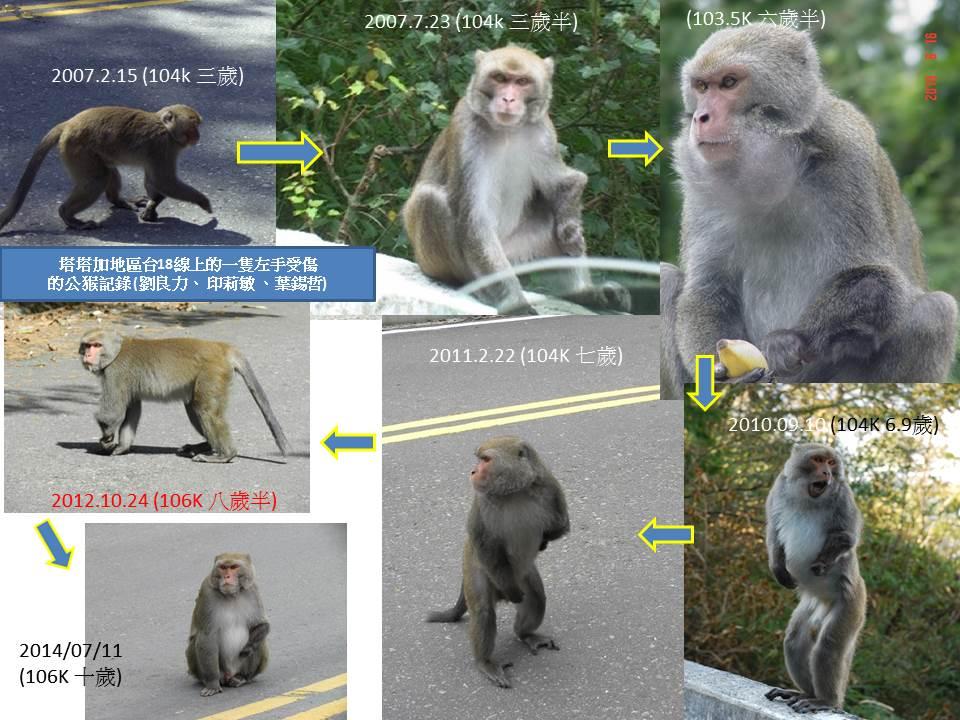 2013玉山獼猴家族資料組:2007至2014左手受傷.jpg