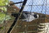 108 哥斯大黎加 亞雷納 拉巴斯瀑布生態園區:DSC06725.JPG