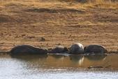 南非 彼蘭斯堡國家公園:1 南非 匹蘭斯堡 DSC00521.JPG