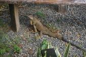 108 哥斯大黎加 亞雷納 拉巴斯瀑布生態園區:DSC06663.JPG