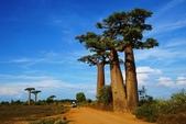 108 馬達加斯加 穆隆達瓦:2 馬 猴麵包樹 DSC04682.JPG
