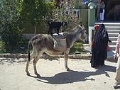 96-埃及古文明:羊與小茅驢