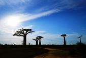 108 馬達加斯加 穆隆達瓦:2 馬 猴麵包樹 DSC04713.JPG