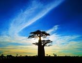 108 馬達加斯加 穆隆達瓦:2 馬 猴麵包樹 DSC04724.JPG