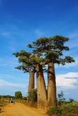 108 馬達加斯加 穆隆達瓦:2 馬 猴麵包樹 DSC04681.JPG