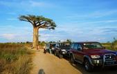 108 馬達加斯加 穆隆達瓦:2 馬 猴麵包樹 DSC04732.JPG