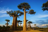 108 馬達加斯加 穆隆達瓦:2 馬 猴麵包樹 DSC04746.JPG