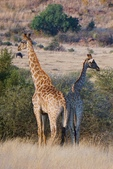 南非 彼蘭斯堡國家公園:1 南非 匹蘭斯堡 DSC00598.JPG