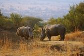南非 彼蘭斯堡國家公園:1 南非 匹蘭斯堡 DSC00608.JPG
