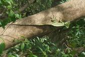108 哥斯大黎加 亞雷納 拉巴斯瀑布生態園區:DSC06680.JPG
