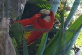 108 哥斯大黎加 亞雷納 拉巴斯瀑布生態園區:DSC06730.JPG
