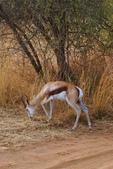 南非 彼蘭斯堡國家公園:1 南非 匹蘭斯堡 DSC00730.JPG