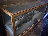 96-埃及古文明:鱷魚木乃伊