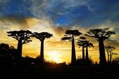 108 馬達加斯加 穆隆達瓦:2 馬 猴麵包樹 DSC04761.JPG