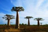 108 馬達加斯加 穆隆達瓦:2 馬 猴麵包樹 DSC04715.JPG