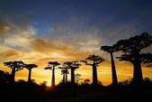 108 馬達加斯加 穆隆達瓦:2 馬 猴麵包樹 DSC04766.JPG
