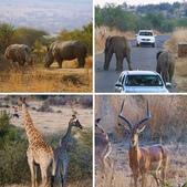 南非 彼蘭斯堡國家公園:相簿封面