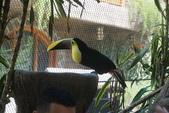 108 哥斯大黎加 亞雷納 拉巴斯瀑布生態園區:DSC06741.JPG