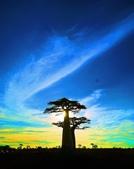 108 馬達加斯加 穆隆達瓦:2 馬 猴麵包樹 DSC04725.JPG