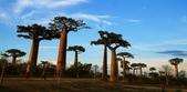 108 馬達加斯加 穆隆達瓦:2 馬 猴麵包樹 DSC04749.JPG