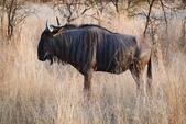 南非 彼蘭斯堡國家公園:1 南非 匹蘭斯堡 DSC00578.JPG