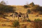 南非 彼蘭斯堡國家公園:1 南非 匹蘭斯堡 DSC00604.JPG