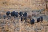 南非 彼蘭斯堡國家公園:1 南非 匹蘭斯堡 DSC00614.JPG