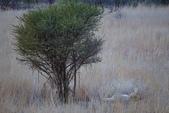 南非 彼蘭斯堡國家公園:1 南非 匹蘭斯堡 DSC00626.JPG