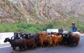 108 塔吉克 :羊群