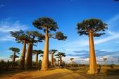 108 馬達加斯加 穆隆達瓦:2 馬 猴麵包樹DSC04745.JPG