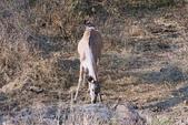 南非 彼蘭斯堡國家公園:1 南非 匹蘭斯堡 DSC00507.JPG