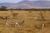 南非 彼蘭斯堡國家公園:1 南非 匹蘭斯堡 DSC00736.JPG