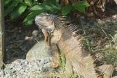 108 哥斯大黎加 亞雷納 拉巴斯瀑布生態園區:DSC06667.JPG