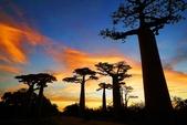 108 馬達加斯加 穆隆達瓦:2 馬 猴麵包樹 DSC04771.JPG